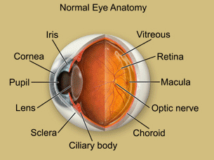 eye anatomy is key to understanding eye health